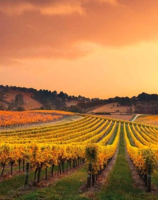 nocton vineyard richmond