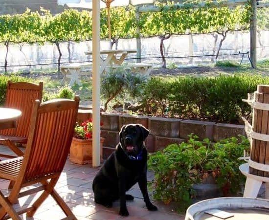 accommodation richmond vineyard