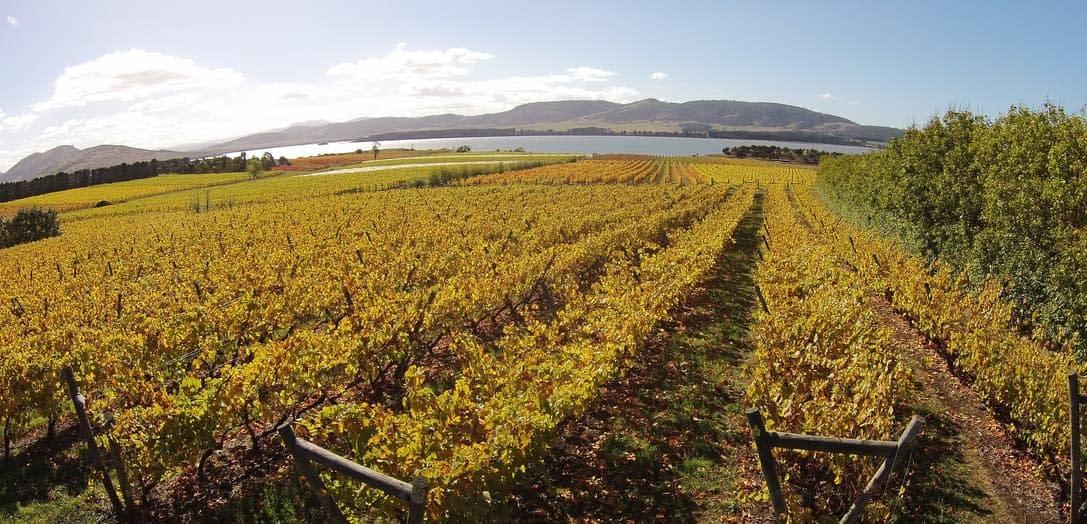 riversdale estate vineyard