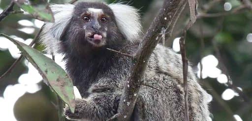 zoodoo wildlife park richmond